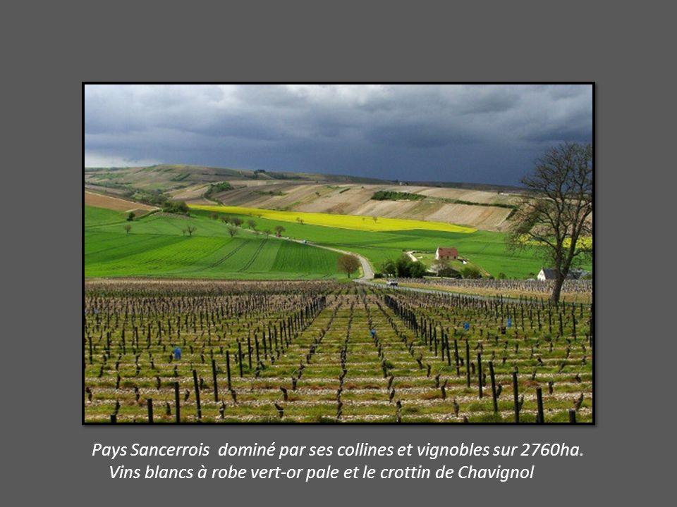 Pays Sancerrois dominé par ses collines et vignobles sur 2760ha.