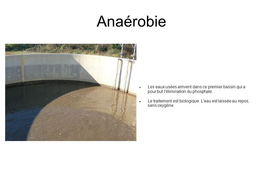 Anaérobie  Les eaux usées arrivent dans ce premier bassin qui a pour but l élimination du phosphate.