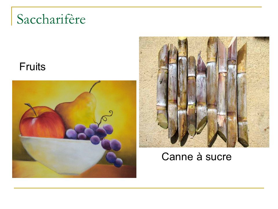 Saccharifère Canne à sucre Fruits