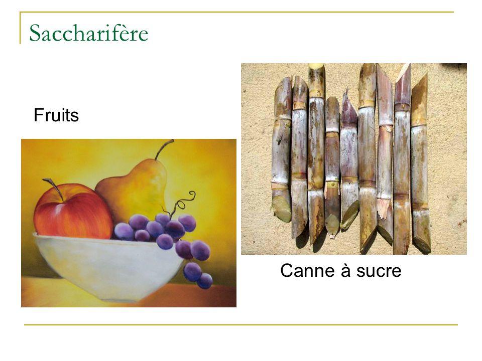 Spiritueux d'origine saccharifères  Rhum  Kirsch  William  Marc  pomme