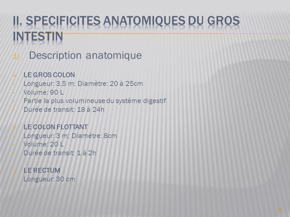 1) Description anatomique  LE GROS COLON • Longueur: 3,5 m; Diamètre: 20 à 25cm • Volume: 90 L • Partie la plus volumineuse du système digestif • Durée de transit: 18 à 24h  LE COLON FLOTTANT • Longueur: 3 m; Diamètre: 8cm • Volume: 20 L • Durée de transit: 1 à 2h  LE RECTUM • Longueur: 30 cm 10