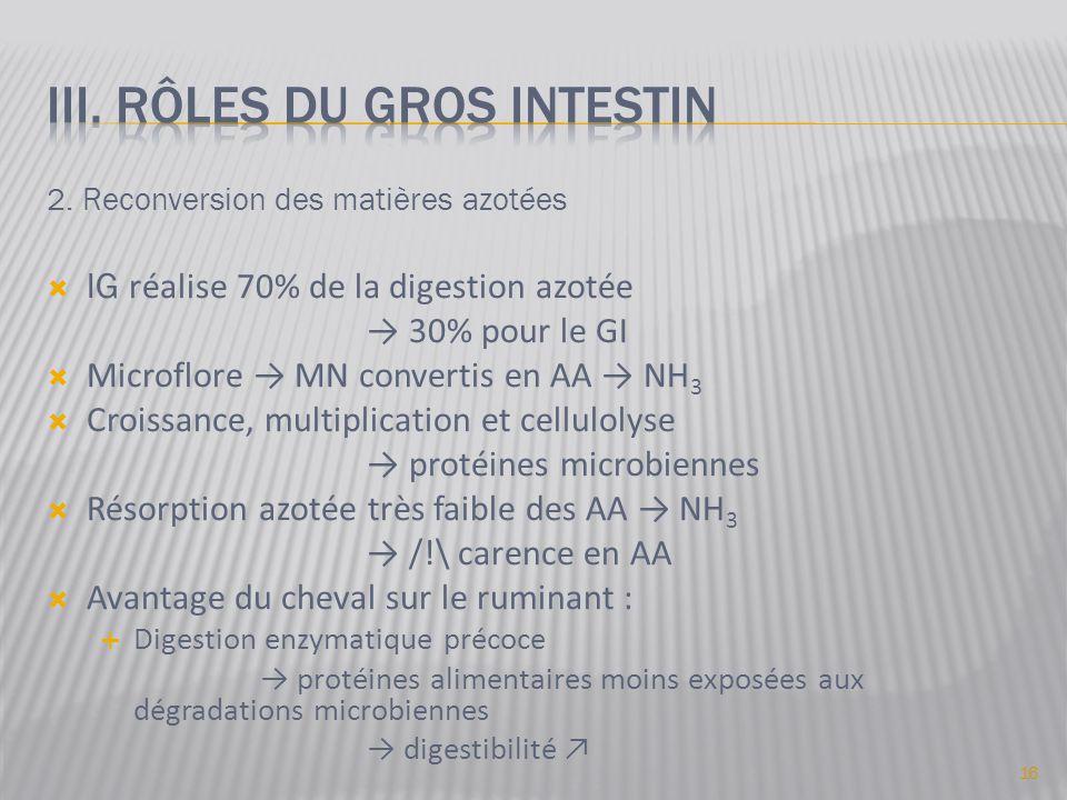 2. Reconversion des matières azotées  IG réalise 70% de la digestion azotée → 30% pour le GI  Microflore → MN convertis en AA → NH 3  Croissance, m