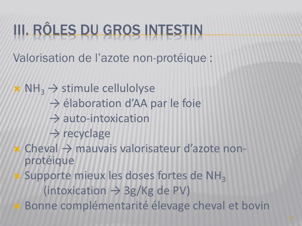 Valorisation de l'azote non-protéique :  NH 3 → stimule cellulolyse → élaboration d'AA par le foie → auto-intoxication → recyclage  Cheval → mauvais