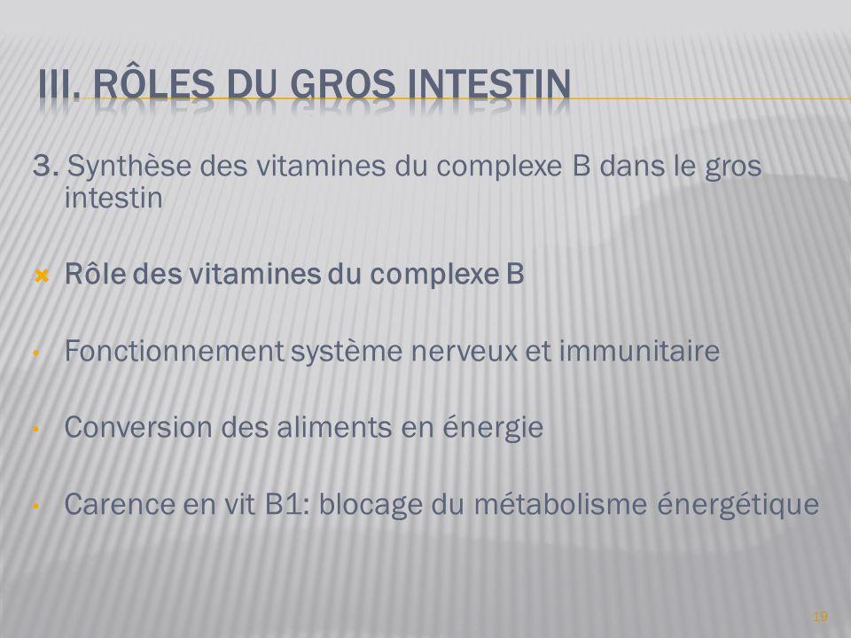 3. Synthèse des vitamines du complexe B dans le gros intestin  Rôle des vitamines du complexe B • Fonctionnement système nerveux et immunitaire • Con