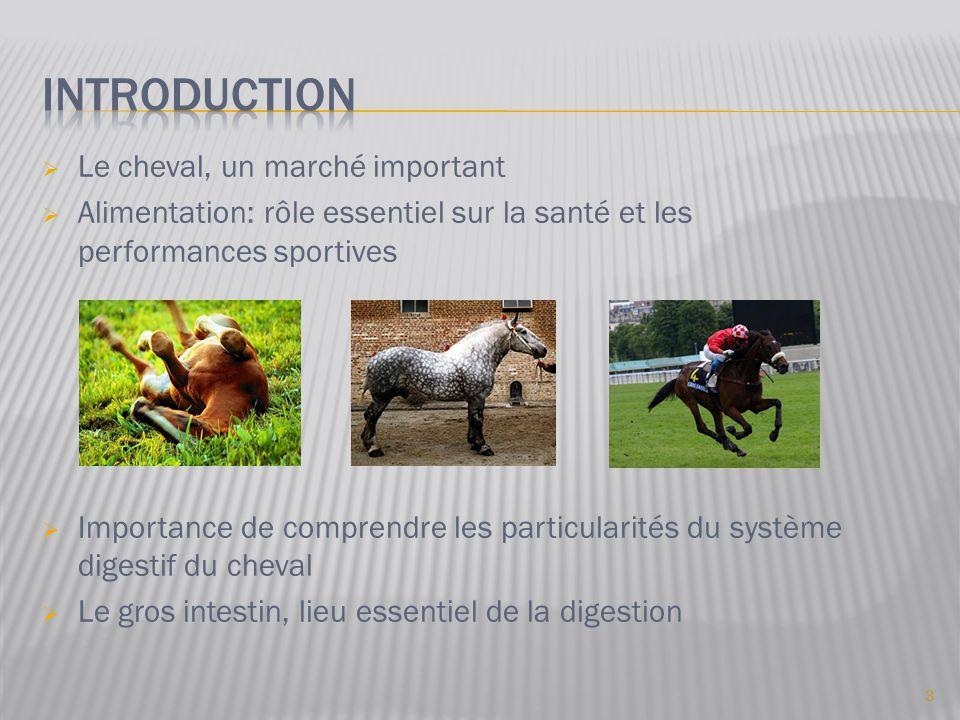  Le cheval, un marché important  Alimentation: rôle essentiel sur la santé et les performances sportives  Importance de comprendre les particularités du système digestif du cheval  Le gros intestin, lieu essentiel de la digestion 3
