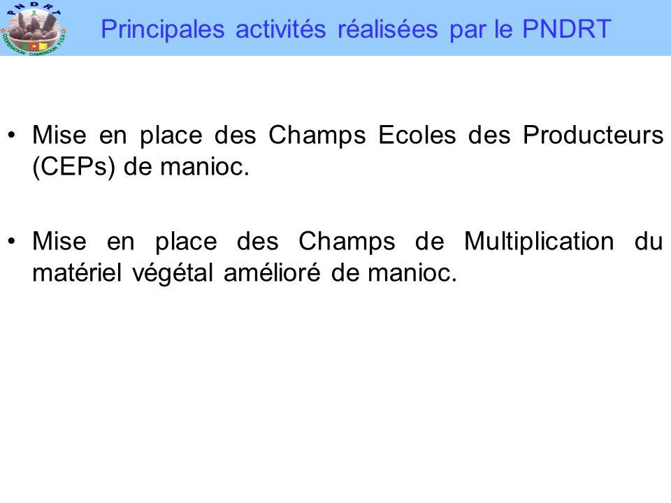 Principales activités réalisées par le PNDRT •Mise en place des Champs Ecoles des Producteurs (CEPs) de manioc. •Mise en place des Champs de Multiplic