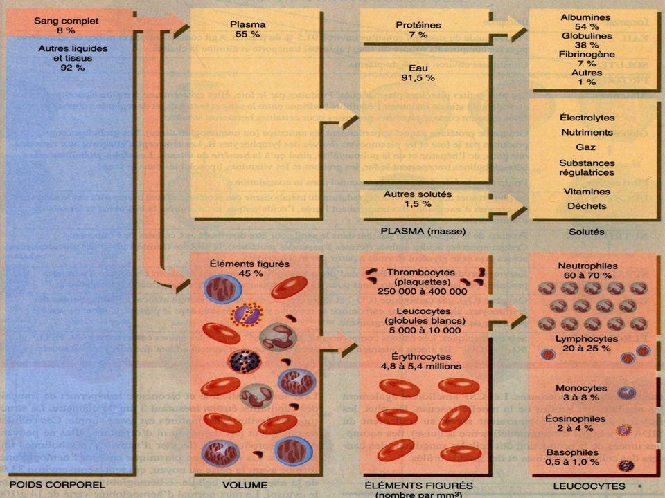 PHYSIOLOGIE DU SANG: •La biosynthèse des globules rouges commence au stade embryonnaire, à partir de la 3ème semaine de développement, au niveau du sac vitellin.