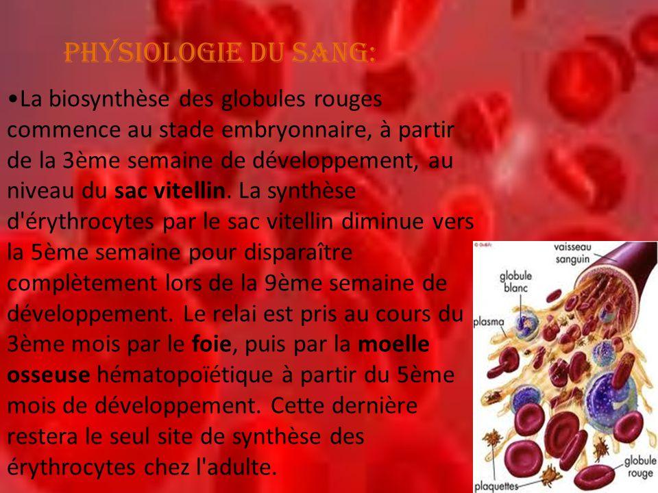 PHYSIOLOGIE DU SANG: •La biosynthèse des globules rouges commence au stade embryonnaire, à partir de la 3ème semaine de développement, au niveau du sa