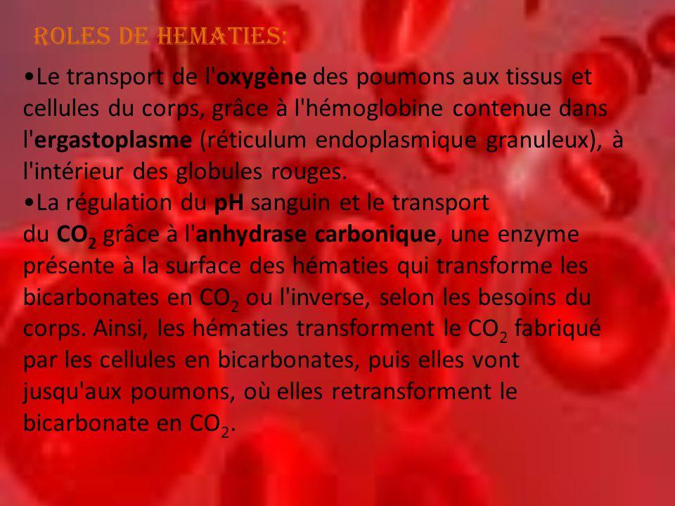 •Le transport de l'oxygène des poumons aux tissus et cellules du corps, grâce à l'hémoglobine contenue dans l'ergastoplasme (réticulum endoplasmique g
