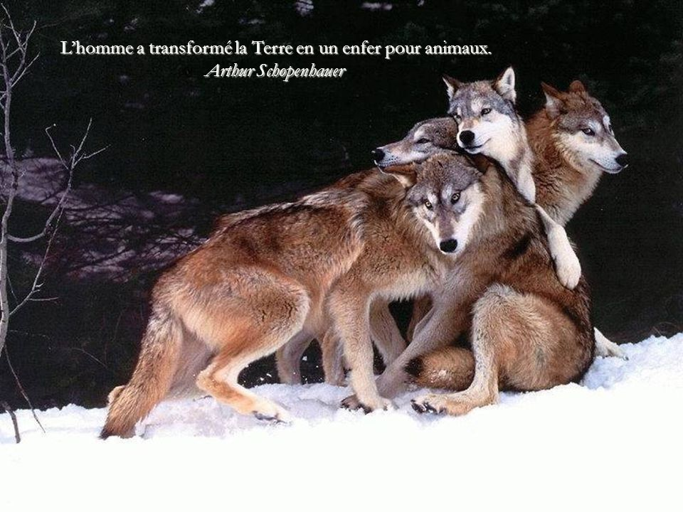 Tant que vous n'avez pas aimé un animal, une partie de votre âme sera toujours sans éclat, endormie. Anatole France