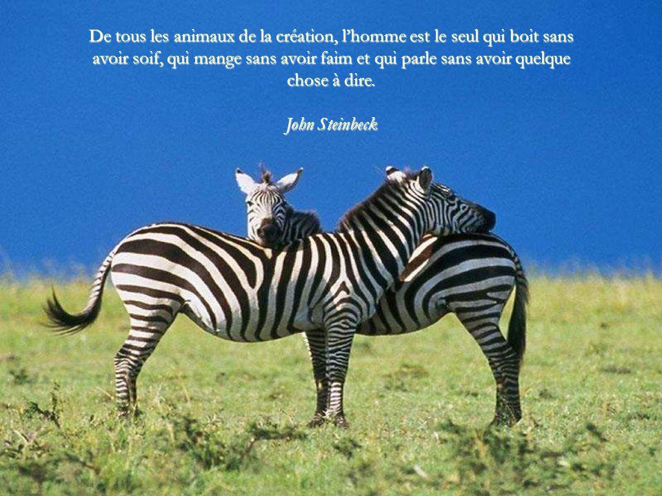 Les animaux sont de très bons amis. Ils ne posent pas de questions et ils ne donnent pas de critiques. George Elliot