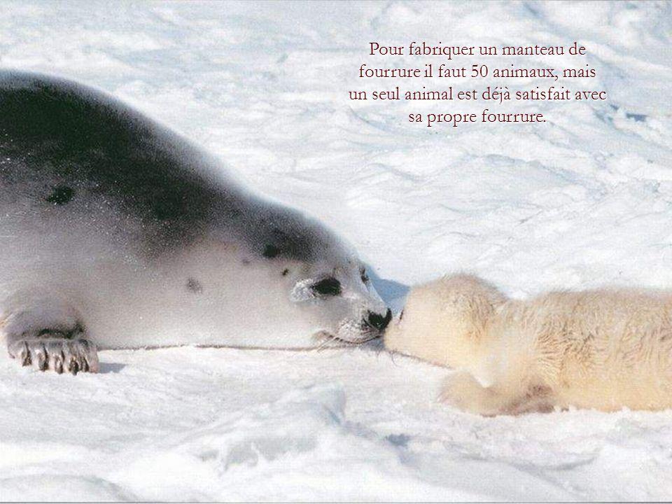 Les animaux sont de très bons amis.