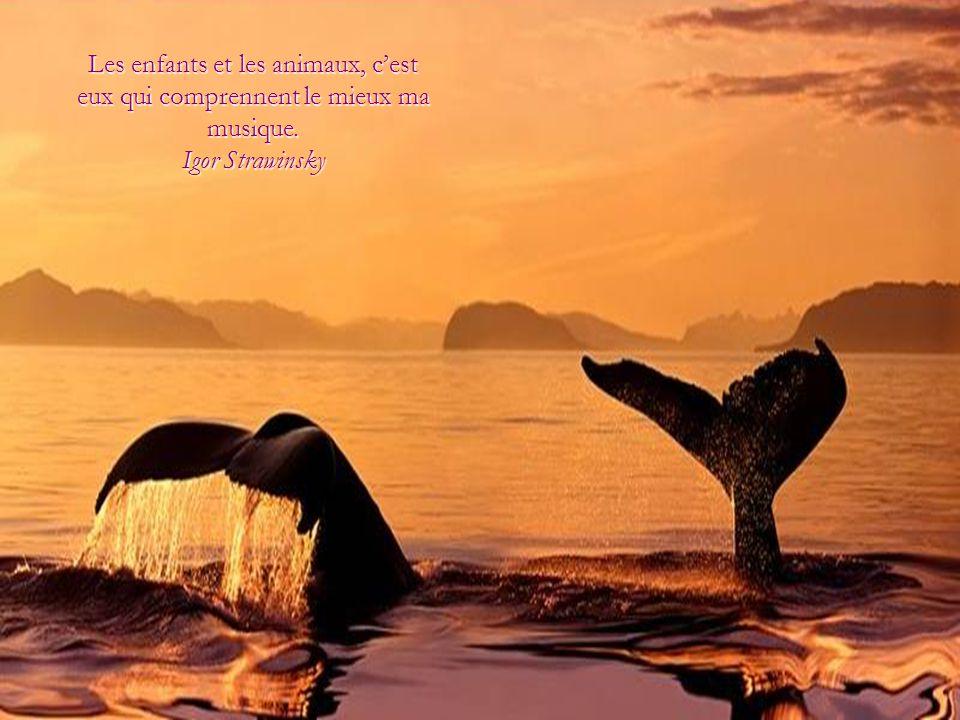 L'amour pour toutes les créatures vivantes est la qualité la plus noble de l'homme. Charles Darwin Charles Darwin
