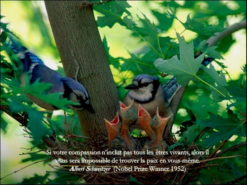 Si votre compassion n'inclut pas tous les êtres vivants, alors il vous sera impossible de trouver la paix en vous-même.
