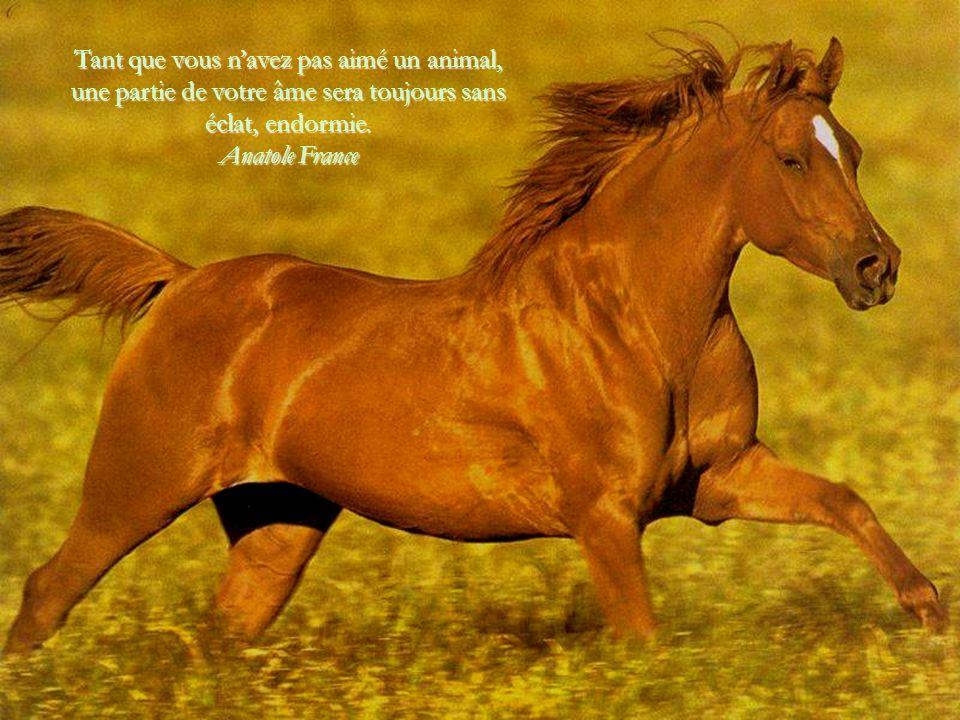 Tant que vous n'avez pas aimé un animal, une partie de votre âme sera toujours sans éclat, endormie.
