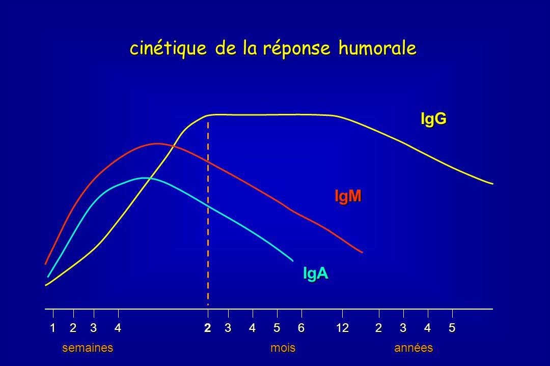 234561223451243 semainesmoisannées IgG IgM IgA cinétique de la réponse humorale