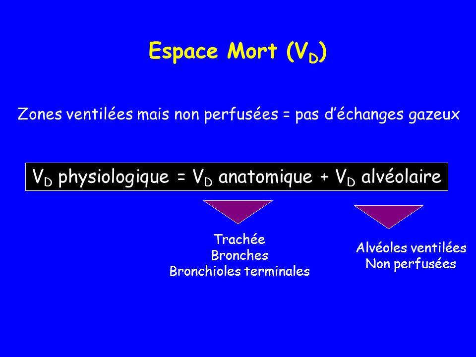 Espace Mort (V D ) V D physiologique = V D anatomique + V D alvéolaire Zones ventilées mais non perfusées = pas d'échanges gazeux Trachée Bronches Bro