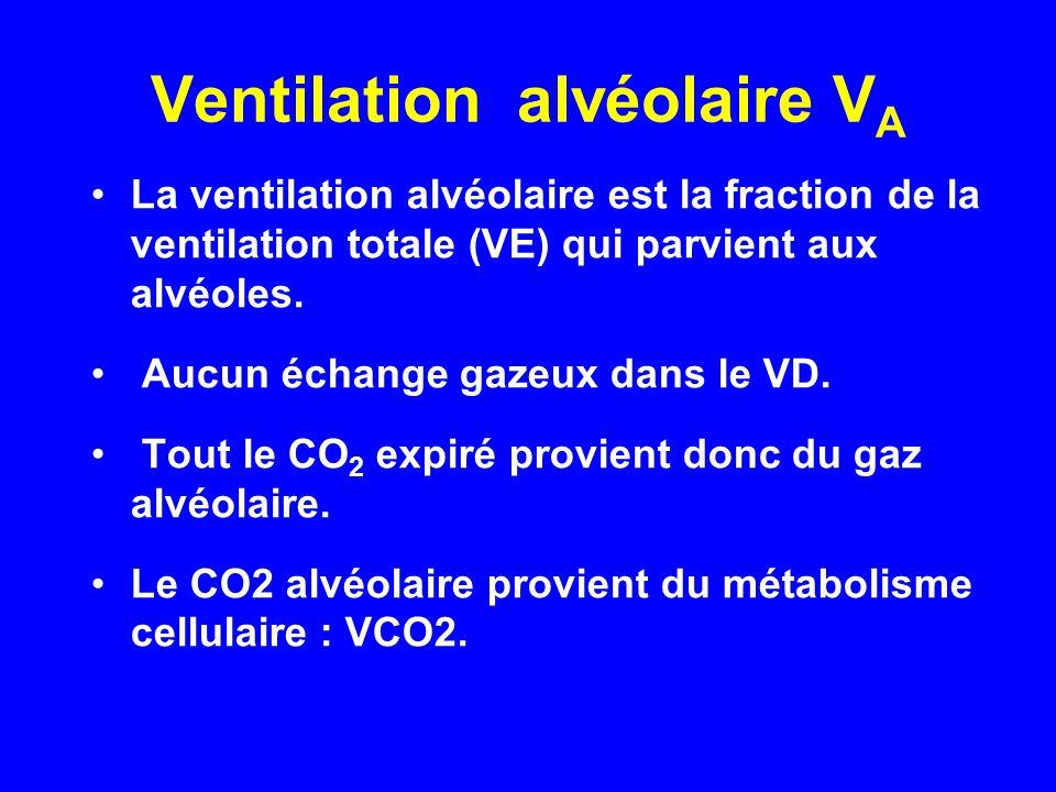 Ventilation alvéolaire V A •La ventilation alvéolaire est la fraction de la ventilation totale (VE) qui parvient aux alvéoles. • Aucun échange gazeux