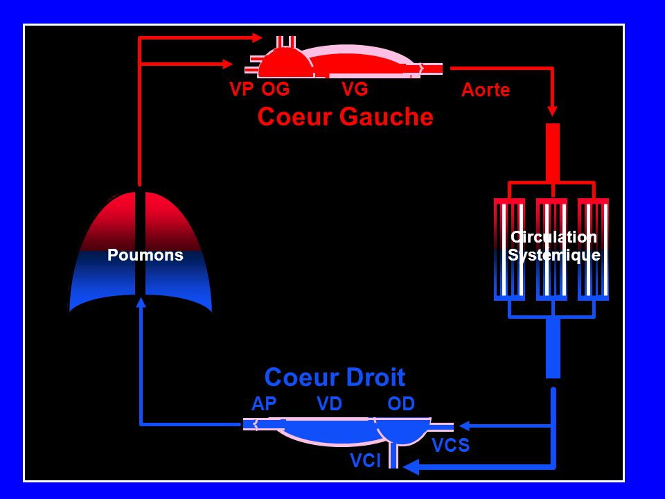 VGOGVP Poumons Circulation Systémique OD VCS VCI VDAP Coeur Gauche Coeur Droit Aorte