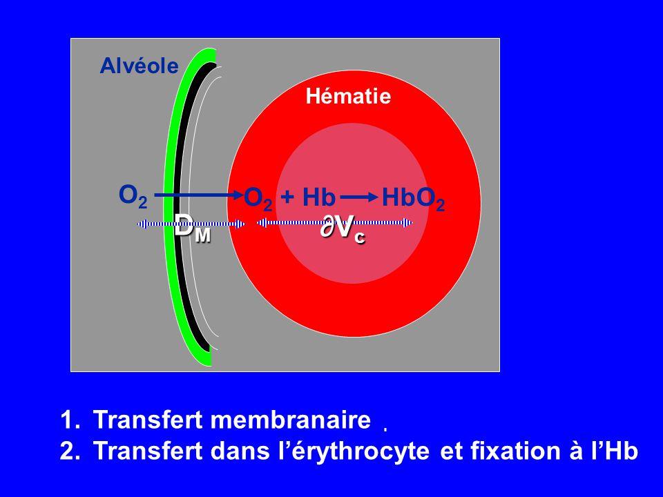 Hématie O 2 + HbHbO 2 ∂Vc∂Vc∂Vc∂Vc Alvéole DMDMDMDM O2O2 1.Transfert membranaire 2.Transfert dans l'érythrocyte et fixation à l'Hb