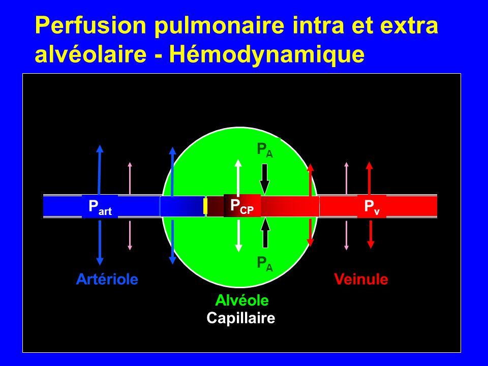 P art P CP PvPv PAPA PAPA Artériole Alvéole Veinule Capillaire Perfusion pulmonaire intra et extra alvéolaire - Hémodynamique