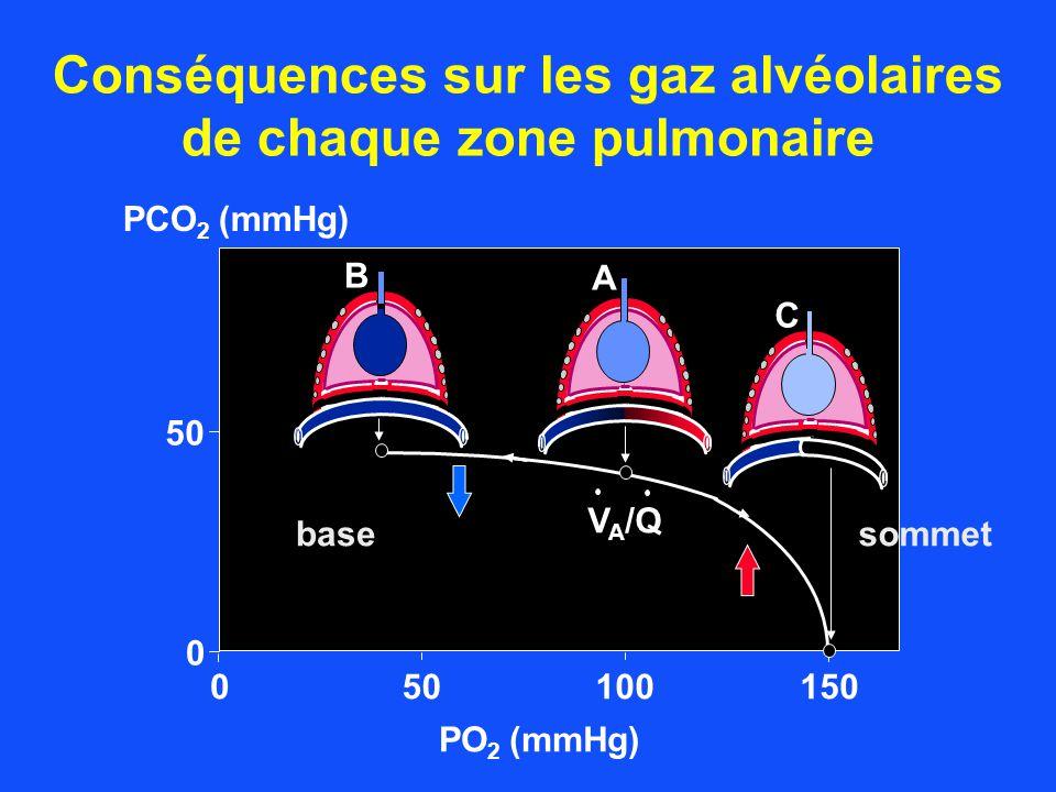 050100150 PO 2 (mmHg) 50 0 PCO 2 (mmHg) V A /Q A B C Conséquences sur les gaz alvéolaires de chaque zone pulmonaire basesommet