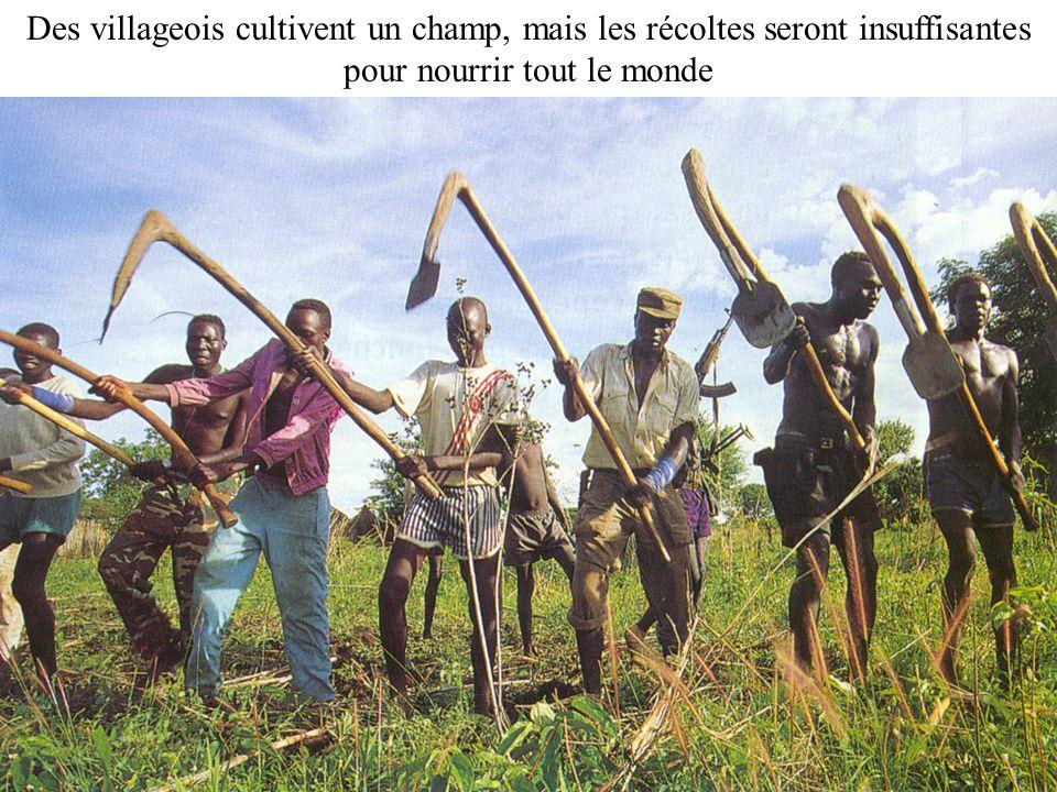 Exode rural 6 Des villageois cultivent un champ, mais les récoltes seront insuffisantes pour nourrir tout le monde