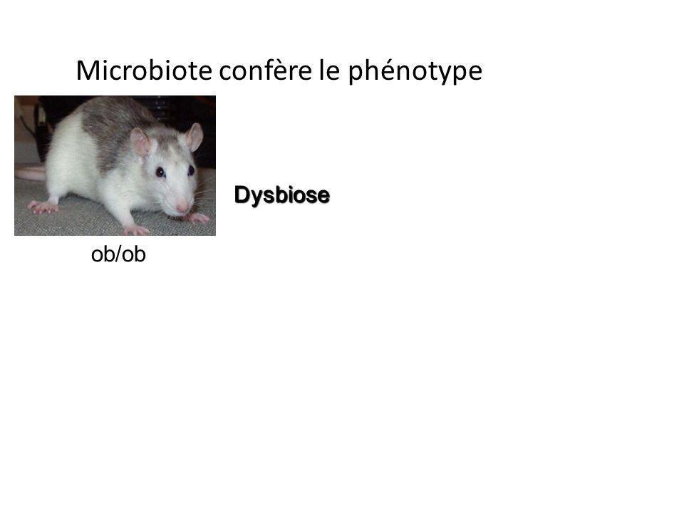 ob/ob Dysbiose Microbiote confère le phénotype