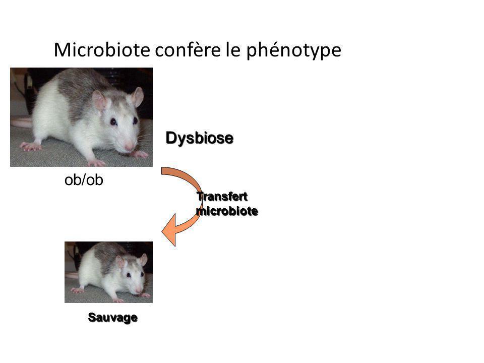 Sauvage Transfert microbiote Dysbiose ob/ob Microbiote confère le phénotype
