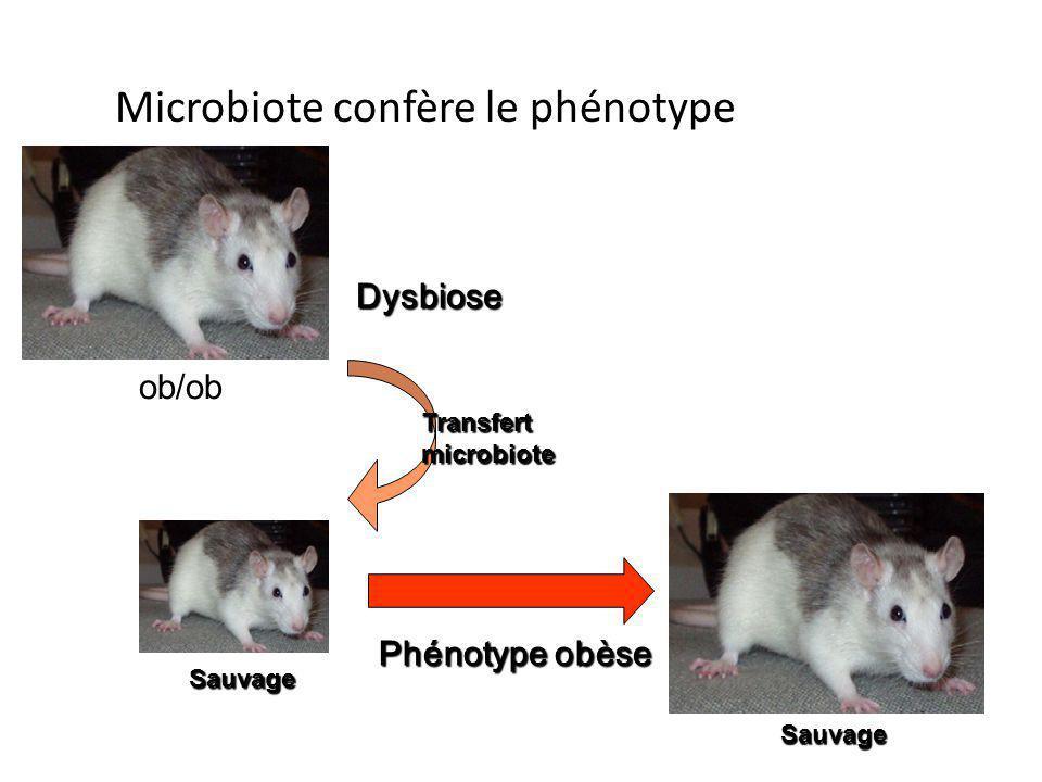 Phénotype obèse Dysbiose ob/ob Transfert microbiote Microbiote confère le phénotype Sauvage Sauvage