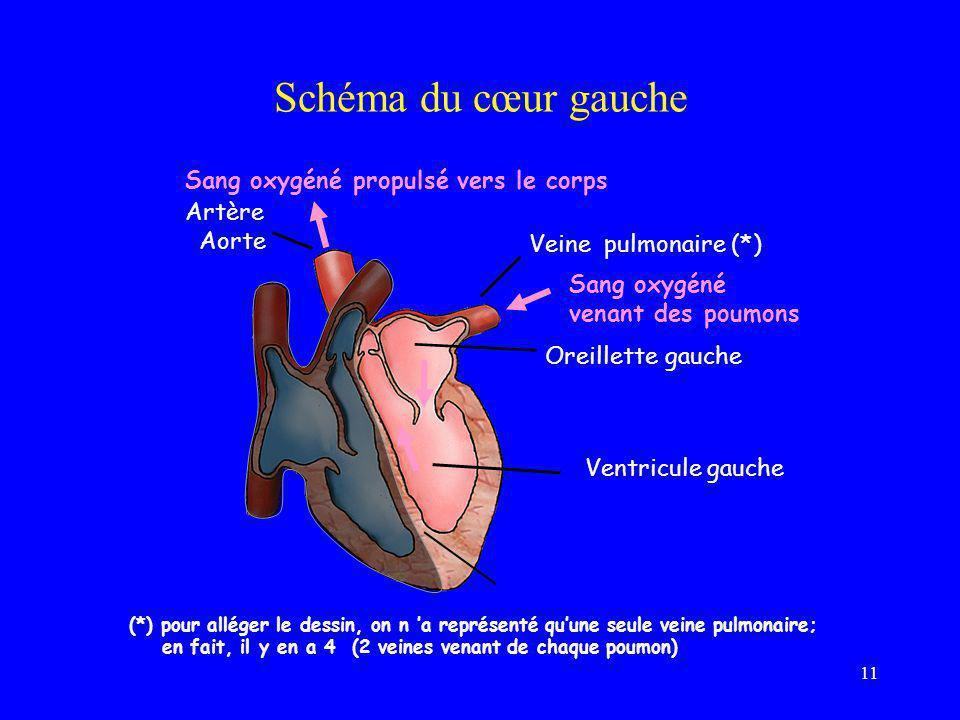11 Schéma du cœur gauche Oreillette gauche Ventricule gauche Veine pulmonaire (*) Artère Aorte Sang oxygéné venant des poumons (*) pour alléger le des