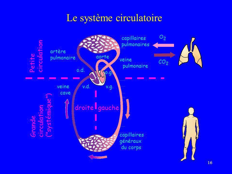 16 Le système circulatoire artère pulmonaire veine cave capillaires généraux du corps CO 2 O 2 capillaires pulmonaires Petite circulation Grande circu