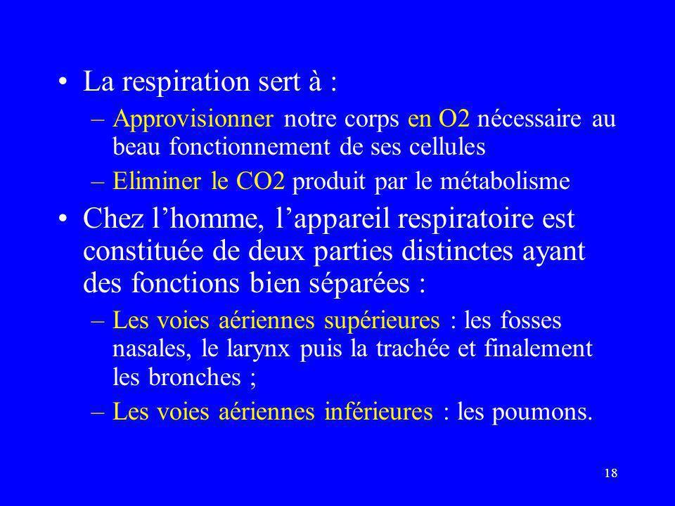18 •La respiration sert à : –Approvisionner notre corps en O2 nécessaire au beau fonctionnement de ses cellules –Eliminer le CO2 produit par le métabo