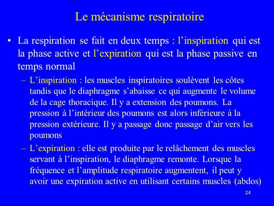 24 Le mécanisme respiratoire •La respiration se fait en deux temps : l'inspiration qui est la phase active et l'expiration qui est la phase passive en