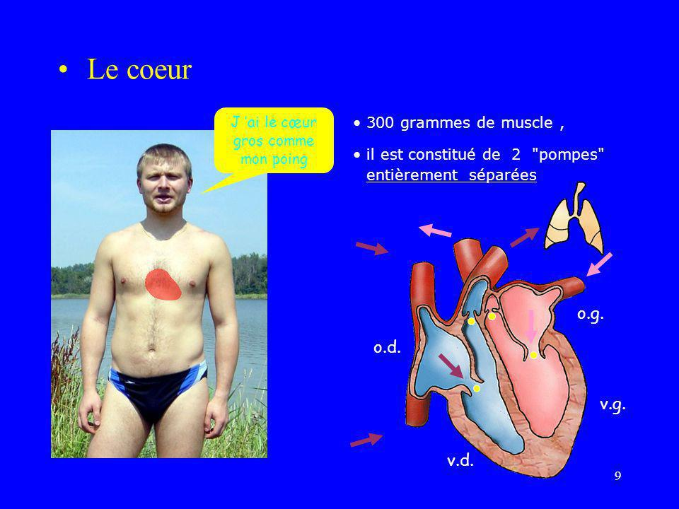 10 •Le cœur gauche (sang rouge oxygéné): –récolte au niveau de son oreillette le sang oxygéné des poumons grâce aux veines pulmonaires –Propulse, via son ventricule et grâce à l'aorte, ce sang qui ira irriguer tout l'organisme •Le cœur droit (sang noir peu oxygéné et chargé en CO2): –récolte au niveau de son oreillette le sang chargé de CO2 du corps grâce aux veines caves –Propulse, via son ventricule et grâce à l'artère(s) pulmonaire(s), ce sang vers les poumons