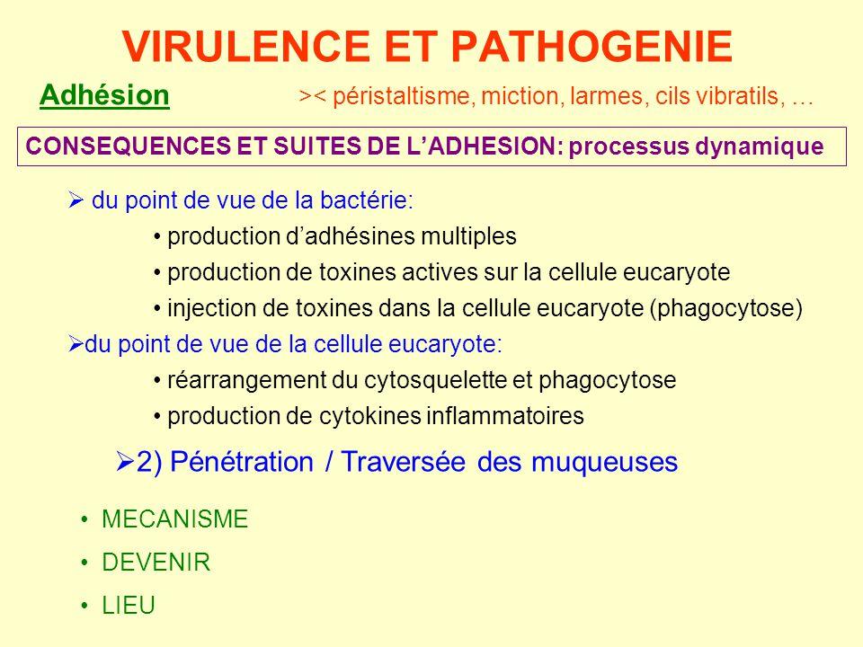  2) Pénétration / Traversée des muqueuses • MECANISME • DEVENIR • LIEU VIRULENCE ET PATHOGENIE CONSEQUENCES ET SUITES DE L'ADHESION: processus dynami