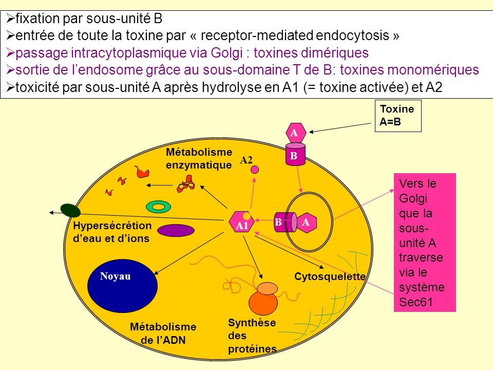 Toxine A=B Métabolisme enzymatique Cytosquelette Noyau Métabolisme de l'ADN Hypersécrétion d'eau et d'ions A B A1 A2 Synthèse des protéines AB  fixat