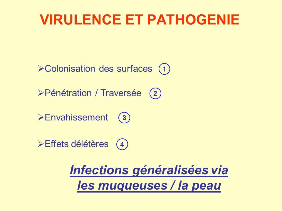  Colonisation des surfaces  Pénétration / Traversée  Envahissement  Effets délétères 1 2 Infections généraliséesvia les muqueuses / la peau 4 3 VI