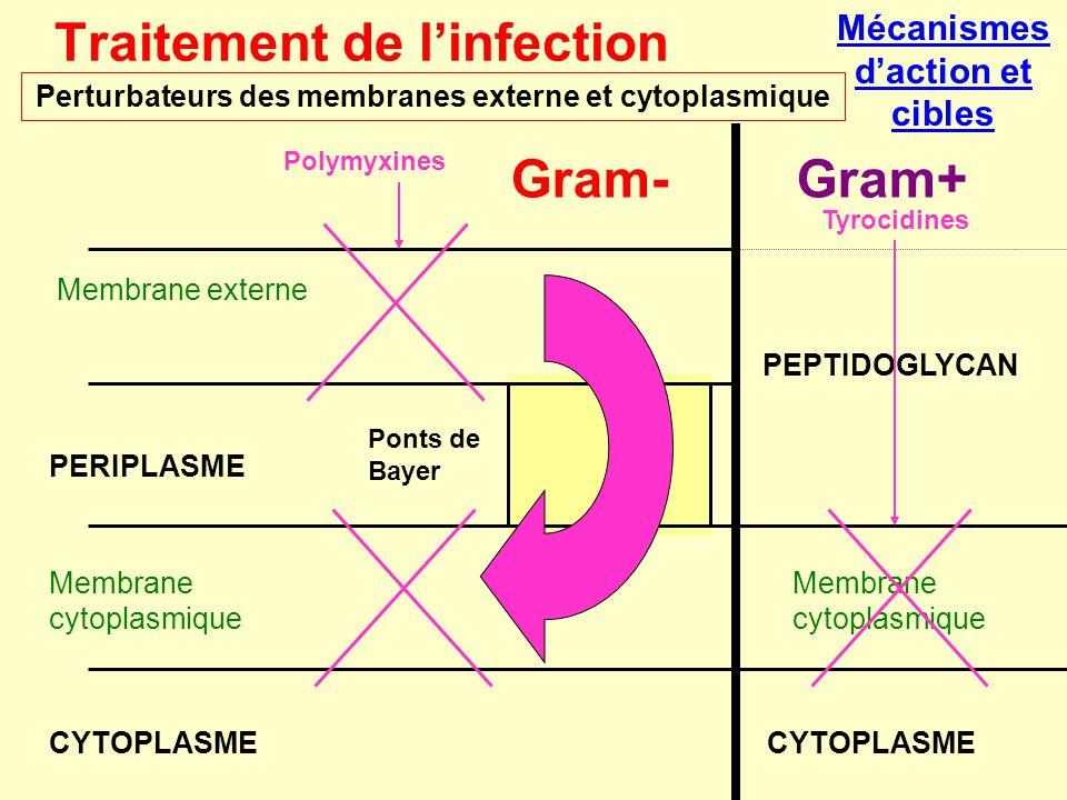 Perturbateurs des membranes externe et cytoplasmique Traitement de l'infection Gram-Gram+ PERIPLASME Membrane cytoplasmique CYTOPLASME Membrane extern