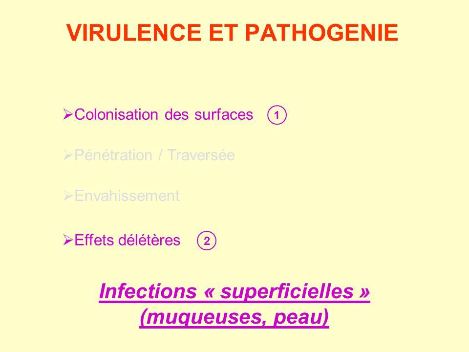  Colonisation des surfaces  Pénétration / Traversée  Envahissement  Effets délétères 1 2 Infections « superficielles » (muqueuses, peau) VIRULENCE