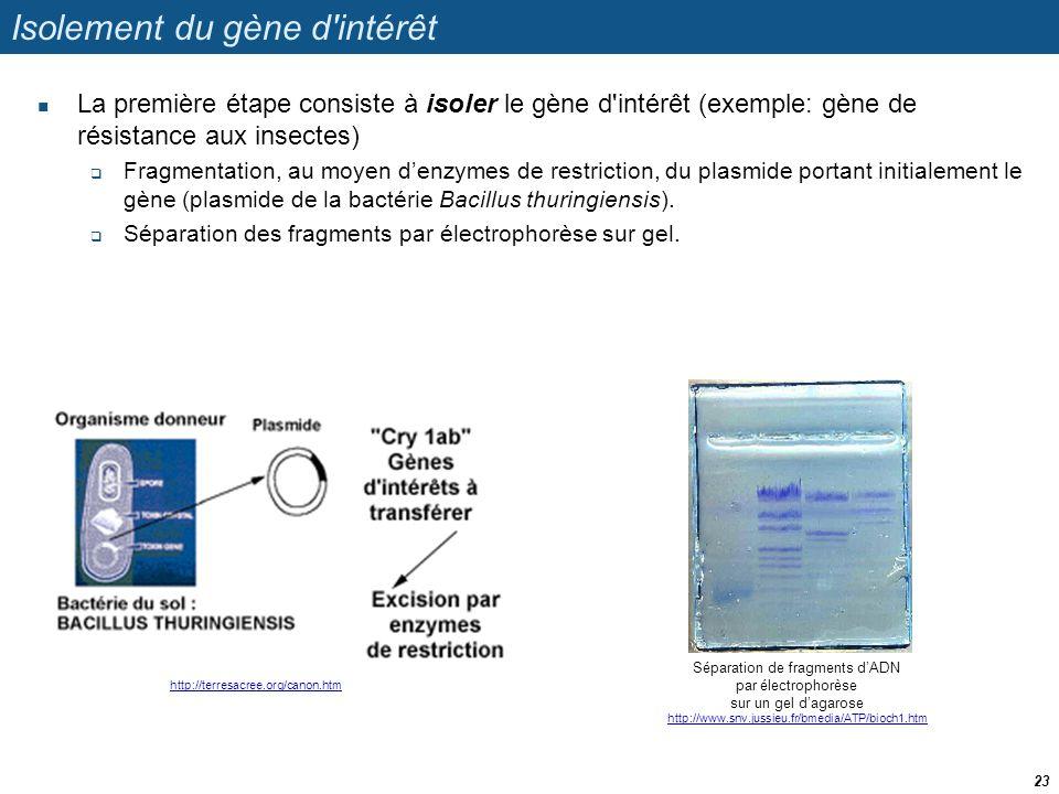 Isolement du gène d'intérêt  La première étape consiste à isoler le gène d'intérêt (exemple: gène de résistance aux insectes)  Fragmentation, au moy