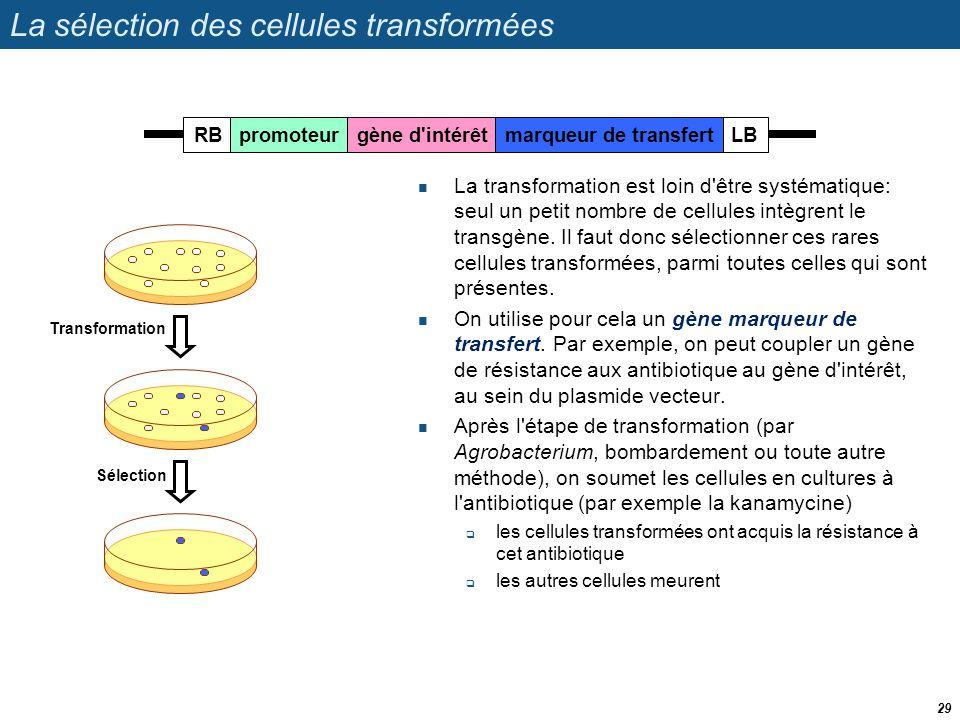 La sélection des cellules transformées  La transformation est loin d'être systématique: seul un petit nombre de cellules intègrent le transgène. Il f
