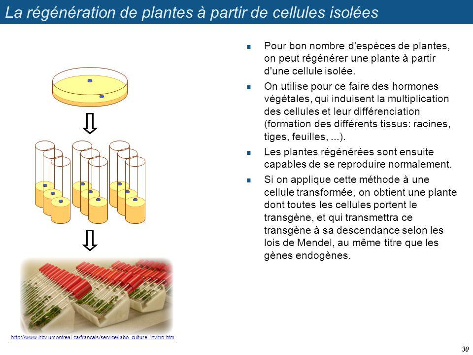 http://www.irbv.umontreal.ca/francais/service/labo_culture_invitro.htm La régénération de plantes à partir de cellules isolées  Pour bon nombre d'esp