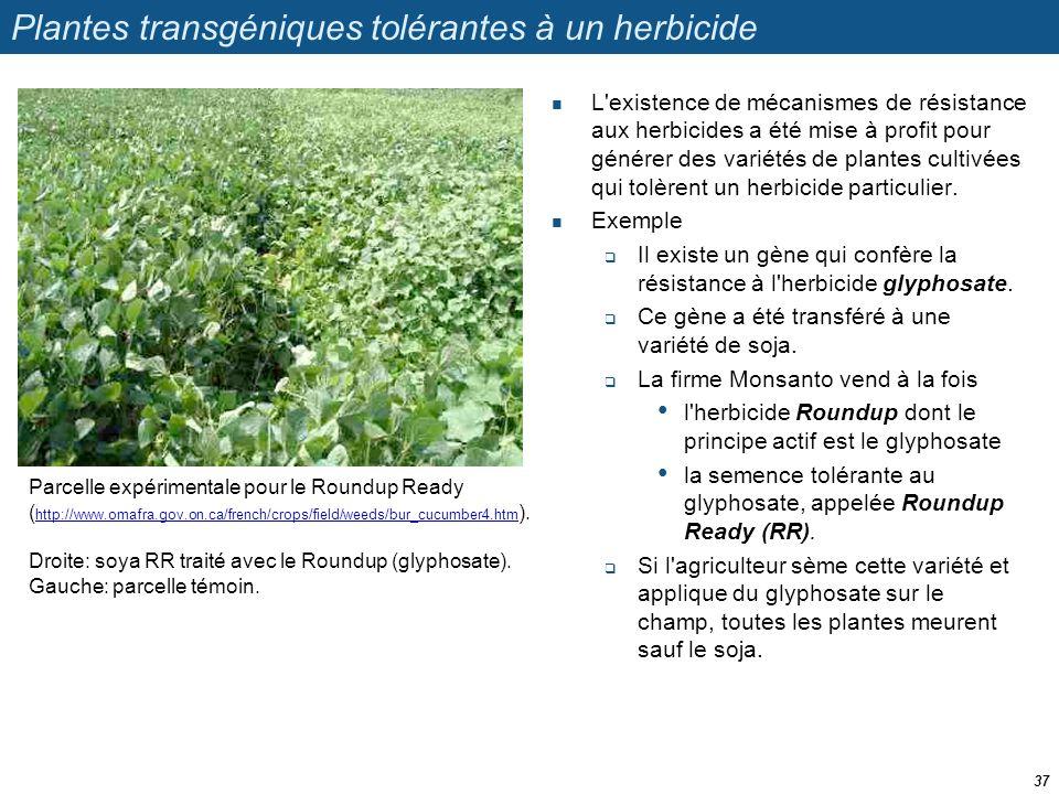 Plantes transgéniques tolérantes à un herbicide  L'existence de mécanismes de résistance aux herbicides a été mise à profit pour générer des variétés