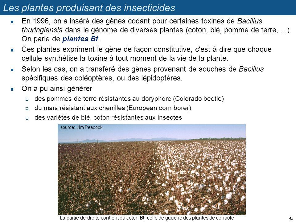 Les plantes produisant des insecticides  En 1996, on a inséré des gènes codant pour certaines toxines de Bacillus thuringiensis dans le génome de div