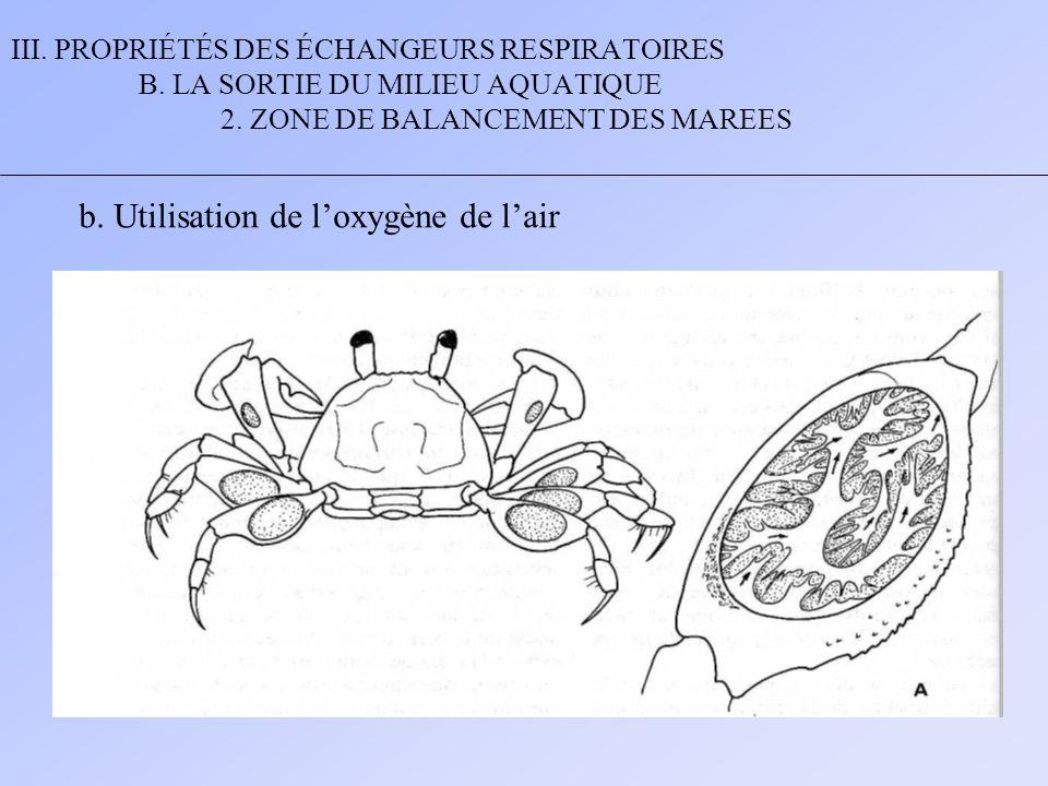 III. PROPRIÉTÉS DES ÉCHANGEURS RESPIRATOIRES B. LA SORTIE DU MILIEU AQUATIQUE 2. ZONE DE BALANCEMENT DES MAREES b. Utilisation de l'oxygène de l'air