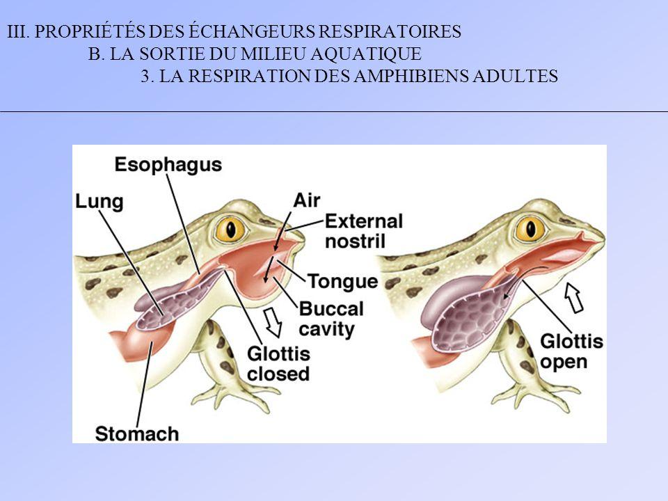 III. PROPRIÉTÉS DES ÉCHANGEURS RESPIRATOIRES B. LA SORTIE DU MILIEU AQUATIQUE 3. LA RESPIRATION DES AMPHIBIENS ADULTES