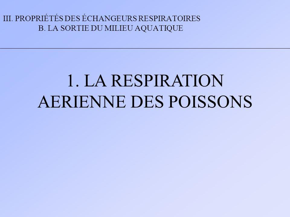 1. LA RESPIRATION AERIENNE DES POISSONS III. PROPRIÉTÉS DES ÉCHANGEURS RESPIRATOIRES B. LA SORTIE DU MILIEU AQUATIQUE
