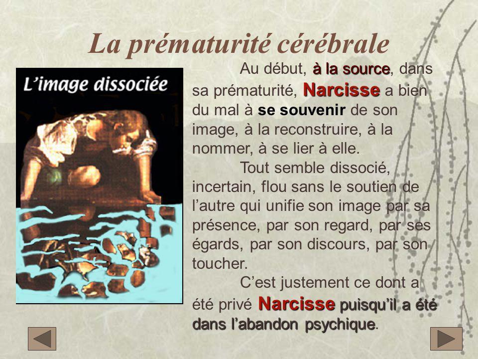 La prématurité cérébrale à la source Narcisse Au début, à la source, dans sa prématurité, Narcisse a bien du mal à se souvenir de son image, à la reconstruire, à la nommer, à se lier à elle.