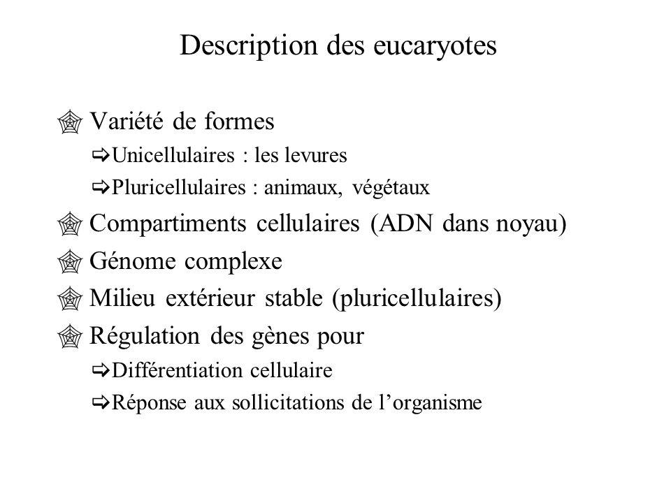 Description des eucaryotes  Variété de formes  Unicellulaires : les levures  Pluricellulaires : animaux, végétaux  Compartiments cellulaires (ADN